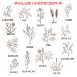 Best herbal remedies for treating constipation. Hand drawn set of medicinal herbs Stock Photo