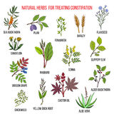 Best herbal remedies for treating constipation. Hand drawn set of medicinal herbs Royalty Free Stock Photography