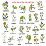 Best herbal remedies for yeast infection Royalty Free Stock Image