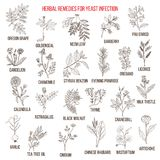 Best herbal remedies for yeast infection. Hand drawn vector set of medicinal plants Stock Image