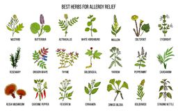 Best herbs for allergy relief. Hand drawn vector set of medicinal plants Stock Photo
