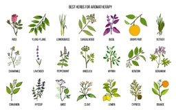 Best herbs for aromatherapy. Hand drawn vector set of medicinal plants Royalty Free Stock Photography