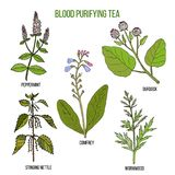 Best herbs for blood purifying tea Royalty Free Stock Image