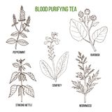 Best herbs for blood purifying tea Stock Photography