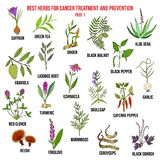 Best herbs for cancer treatment and prevention. Part 1. Hand drawn vector set of medicinal plants stock illustration
