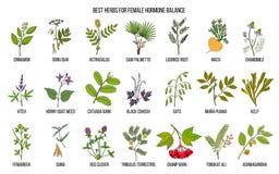 Free Best Herbs For Female Hormone Balance Stock Photos - 115021513