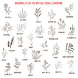 Best herbs for irritable bowel syndrome IBS Royalty Free Stock Photos