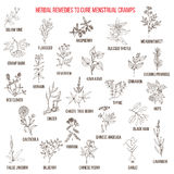 Best herbs for menstrual cramps treatment Stock Image