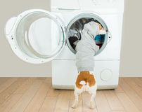 Best hoodie back empty space for your brand logo ad information. Laundry and dry cleaning pet service stock image
