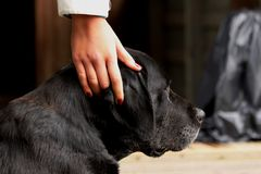 Best human friend. The best mans friend forever Stock Photo