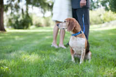 Best Man as Dog Stock Photo