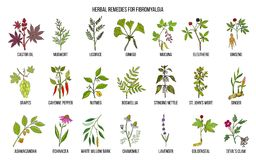 Best medicinal herbs for fibromyalgia. Hand drawn vector set of medicinal plants Royalty Free Stock Photos