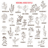 Best medicinal herbs for flu. Hand drawn vector set of medicinal plants Royalty Free Stock Photos