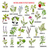 Best medicinal herbs to treat diarrhea. Hand drawn vector set of medicinal plants Stock Image