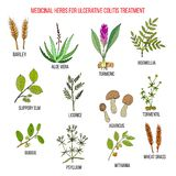 Best medicinal herbs to treat ulcerative colitis. Hand drawn vector set of medicinal plants royalty free illustration
