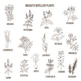 Best mosquito repellent plants. Hand drawn vector set of medicinal plants Stock Photos