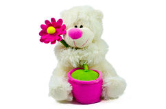 Best Mum. Teddy bear with flower for best mum isolated on a white background stock photos