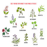Best natural herbs for anxiety and panic attacks Royalty Free Stock Photos
