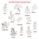 Best natural herbs for anxiety and panic attacks Stock Photo