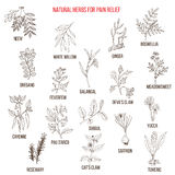 Best natural herbs for pain relief. Hand drawn vector set of medicinal plants Royalty Free Stock Photo