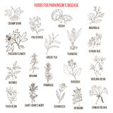Best natural herbs for parkinson disease Royalty Free Stock Photos