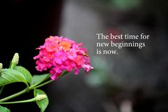 Motivation words with flower background royalty free stock image