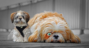 Best of pals Stock Photography