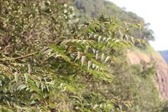 NATURAL PHOTO OF TREE stock image