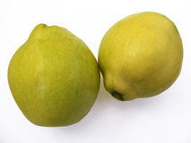 Best quince fruit pictures for advertising and logo designs Stock Photography