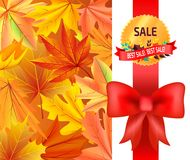 Best Sale Gold Logo Emblem with Leaves Red Ribbon. Best sale gold logo emblem with leaves on red ribbon with bow and background with color maple leaves vector Royalty Free Stock Image
