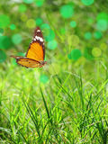 Spring summer cheerful background stock image
