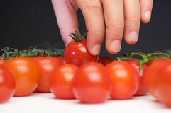 Best tomato. Hand takes the best tomato of all Royalty Free Stock Photography