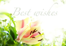 Best Wishes. Greeting for all season royalty free stock photography