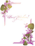 Best Wishes postcard. With bunch of wild violet over white background Royalty Free Stock Photos