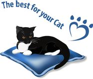 The best for your cat Royalty Free Stock Photo