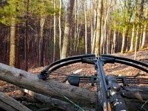 Besta da caça nas madeiras Fotografia de Stock Royalty Free