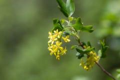 Bestak in de lente stock afbeelding