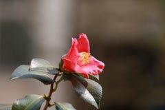 Bestand tegen de winterbloemen Stock Foto