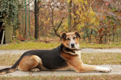 Bestandener Hund Lizenzfreies Stockbild