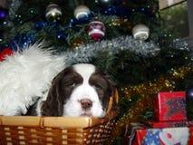Beste aanwezige Kerstmis Stock Afbeelding