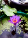 Beste Blume HDR lizenzfreie stockfotografie