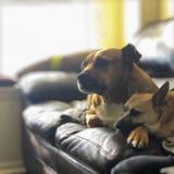 Beste Freunde auf dem Sofa stockfoto
