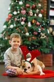 Beste Freunde hübsche blonde Junge und des Welpen rote weiße englische Bulldogge, die Zeit mit einander nah an Weihnachtsbaum ver Lizenzfreies Stockfoto