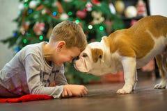 Beste Freunde hübsche blonde Junge und des Welpen rote weiße englische Bulldogge, die Zeit mit einander nah an Weihnachtsbaum ver Lizenzfreie Stockfotografie