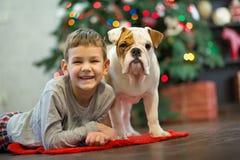 Beste Freunde hübsche blonde Junge und des Welpen rote weiße englische Bulldogge, die Zeit mit einander nah an Weihnachtsbaum ver Stockfoto