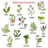 Beste geneeskrachtige kruiden voor osteoartritis Stock Fotografie