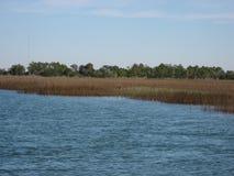 Beste gevonden in zout watermoeras in Charleston South Carolina Royalty-vrije Stock Foto