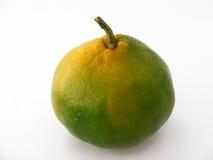 Beste mandarijnbeelden voor originele ontwerpen Stock Foto