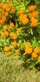 beste orange Blumen der Naturen stockbilder