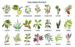 Beste planzliche Heilmittel für Arthritis stock abbildung